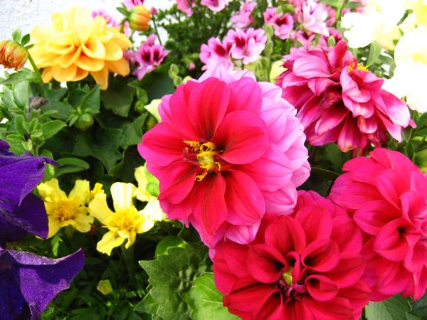 bilder på blommor