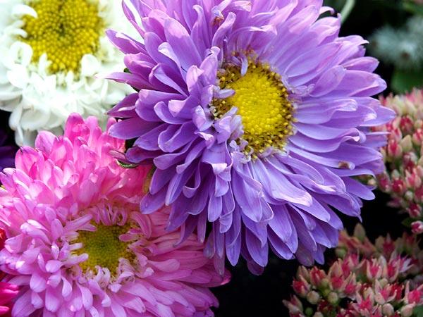 gratis bilder p u00e5 blommor