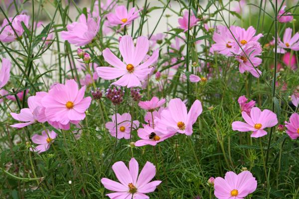 Gratis Bilder Blommor