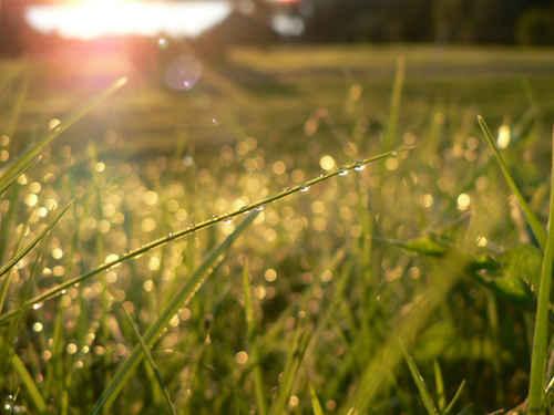 Gratisbild på Dagg i gräset