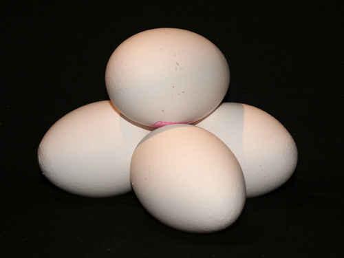 Gratisbild på Ägg
