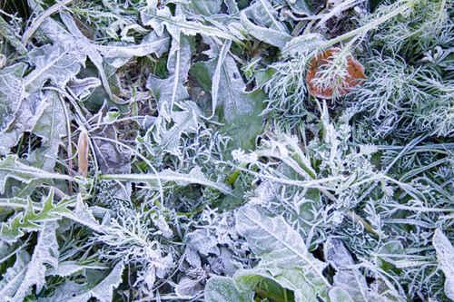 Gratisbild på Frost