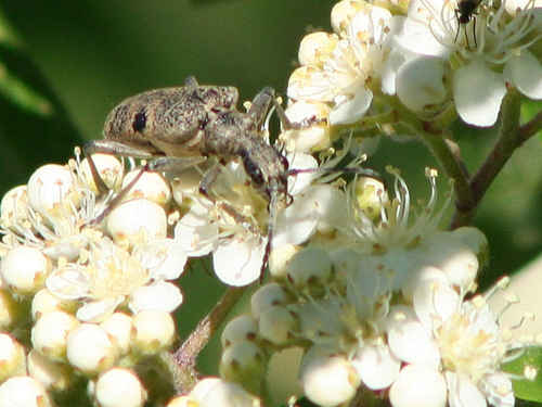 Vykort insekt_paa_roenn