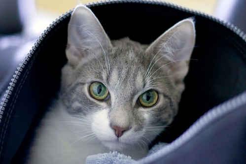 Vykort katt~1