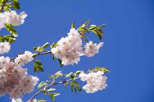 Gratisbild på Blommande gren