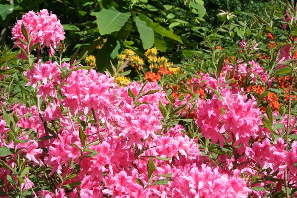 Blommor bilder gratis