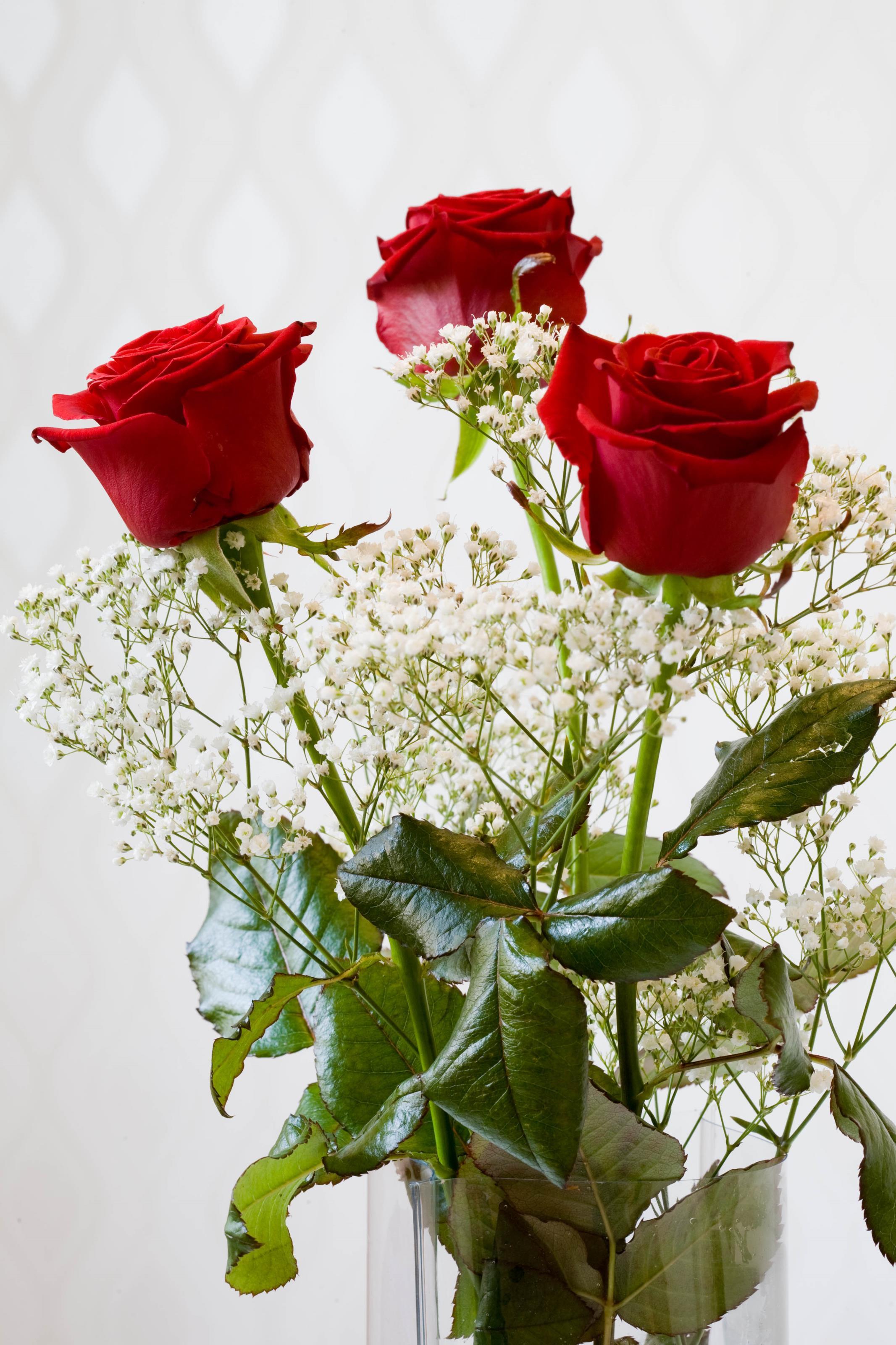 rosarosor-3.jpg